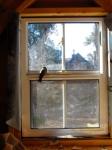 Our birdie guest