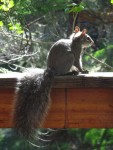 I probably put up more squirrel pictures than people care about. This is unlikely to change :)