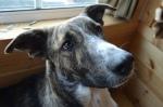 DOG FACE!