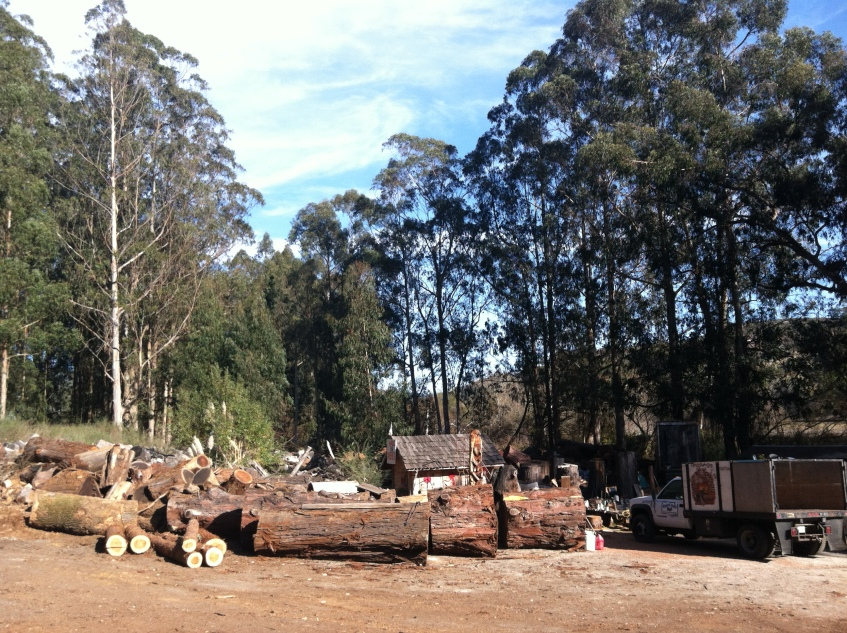 Firewood farms
