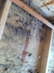 Nothing worse than blurry mould