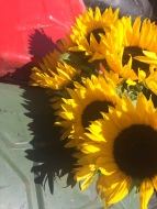 Sunflowers and gas cans